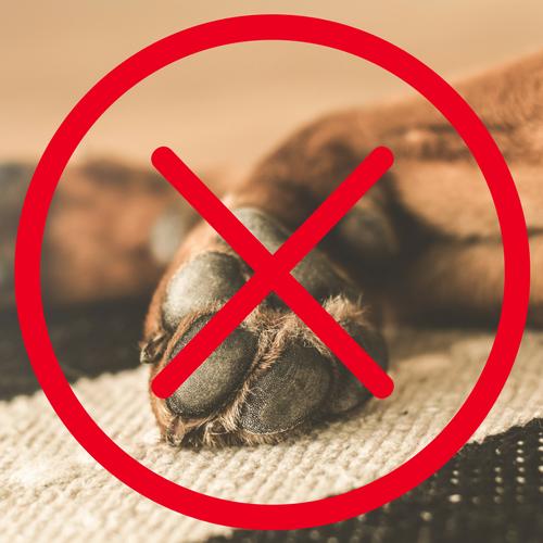Geen huisdieren